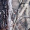 Area birds 3 Dec 17-5610