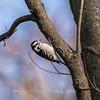 Area birds 3 Dec 17-5696