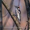 Area birds 3 Dec 17-5672