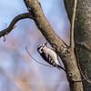 Area birds 3 Dec 17-5691