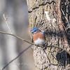Bluebird 29 Dec 2017-7326