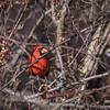 Area birds 3 Dec 17-5571