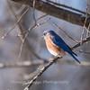 Bluebird 29 Dec 2017-7241