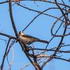 Area birds 3 Dec 17-5707