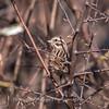 Area birds 3 Dec 17-5577