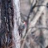 Area birds 3 Dec 17-5609