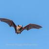 Bat 20 September 2017-8379