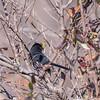 Area birds 3 Dec 17-5569