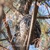 Area birds 3 Dec 17-5600