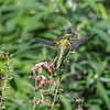 Meadowlark Gardens 11 Sept 2017-7306