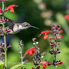 Meadowlark Gardens 11 Sept 2017-7311