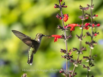 Meadowlark Gardens 11 Sept 2017-7355