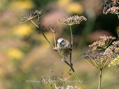Meadowlark Gardens 11 Sept 2017-7427