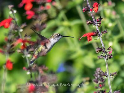 Meadowlark Gardens 11 Sept 2017-7323