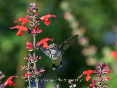 Meadowlark Gardens 11 Sept 2017-7313