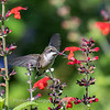 Meadowlark Gardens 11 Sept 2017-7310