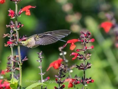 Meadowlark Gardens 11 Sept 2017-7312