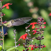 Meadowlark Gardens 11 Sept 2017-7312