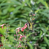 Meadowlark Gardens 11 Sept 2017-7304