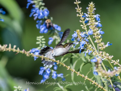 Meadowlark Gardens 11 Sept 2017-7335