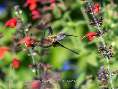 Meadowlark Gardens 11 Sept 2017-7322