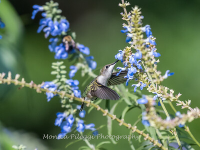 Meadowlark Gardens 11 Sept 2017-7333