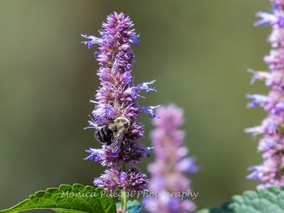 Meadowlark Gardens 11 Sept 2017-7413