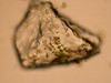 Microbentos en las arenas de Cabo Trafalgar.