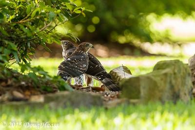 Birds, Wildlife & Nature