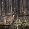 Wildlife Photography by Mary Jurenka Photography