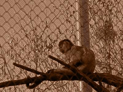 Denver Zoo 1108 (62) sepia