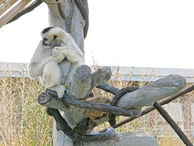 CO 2013 05 Denver Zoo 15