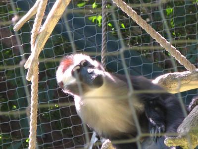 CO 2010 09 Denver Zoo 86