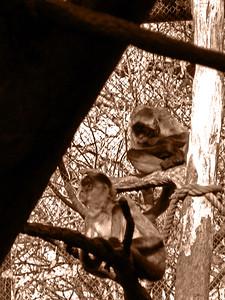 Denver Zoo 1108 (63) sepia