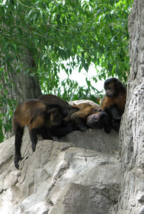 CO 2011 06 Denver Zoo 27