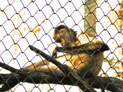 Denver Zoo 1108 (61)