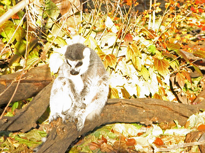Denver Zoo 1108 (70)