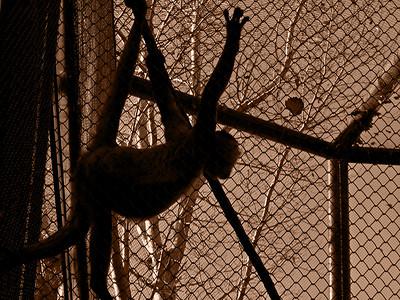 Denver Zoo 1108 (59) sepia