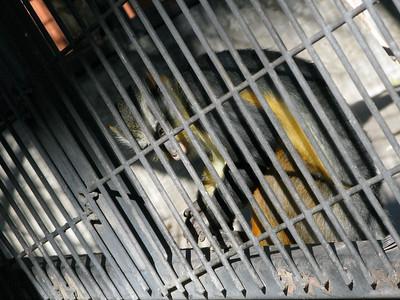 CO 2011 Denver Zoo 01 12