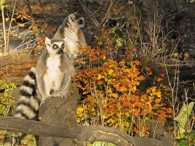Denver Zoo 1108 (68)