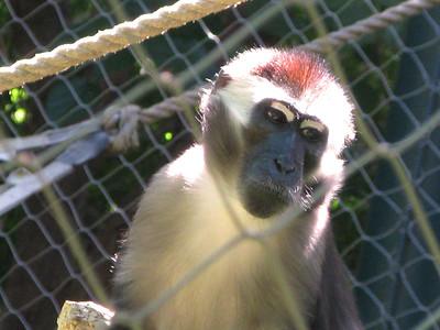 CO 2010 09 Denver Zoo 87
