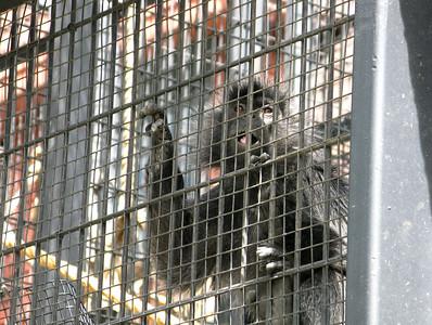 CO 2011 06 Denver Zoo 33