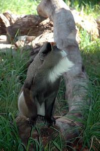 Denver Zoo 0408