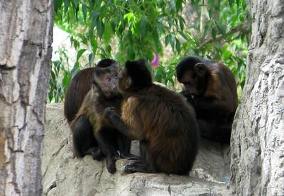 CO 2011 06 Denver Zoo 30