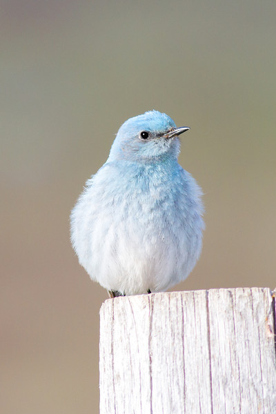 bluebird smugmug (8 of 21)