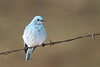 bluebird smugmug (19 of 21)