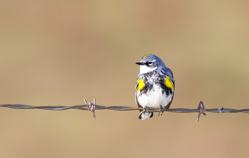 bluebird smugmug (7 of 21)