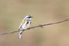 bluebird smugmug (6 of 21)