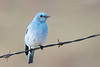 bluebird smugmug (14 of 21)