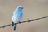 bluebird smugmug (14 of 21)